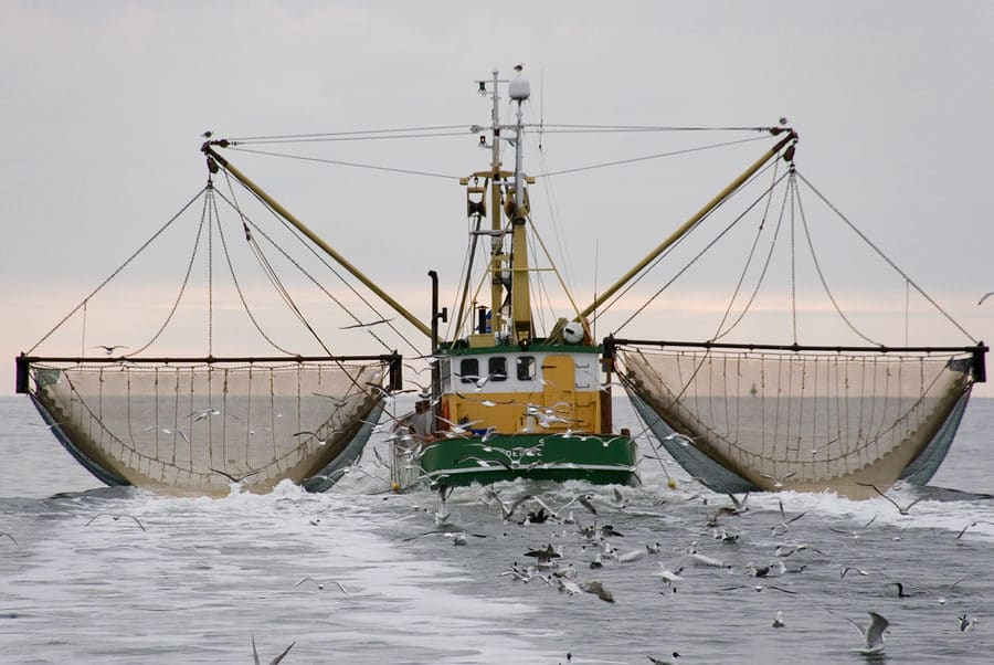 Alaskan Cod Fishing Season – Processor Financing Available